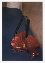 Liver (Pen Holder)